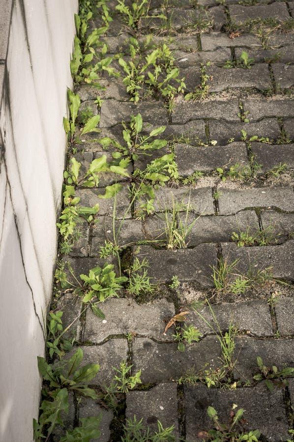 在边路的绿色杂草 库存图片