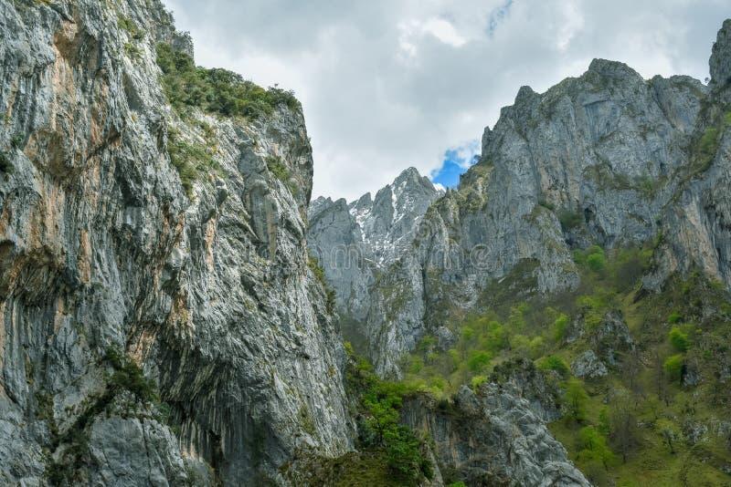 在迁徙路线,阿斯图里亚斯的关心的绿色山风景 免版税图库摄影