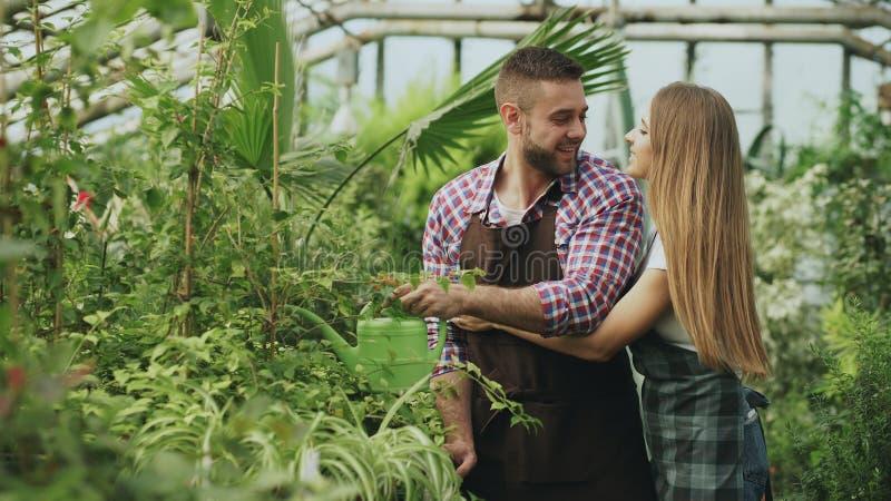 在运作自温室的围裙的愉快的年轻卖花人夫妇 快乐的妇女容忍和亲吻他的丈夫浇灌的花 免版税库存照片