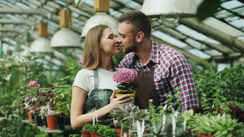 在运作自温室的围裙的愉快的年轻卖花人夫妇 有吸引力的人容忍和亲吻他的拿着花的妻子和 免版税图库摄影