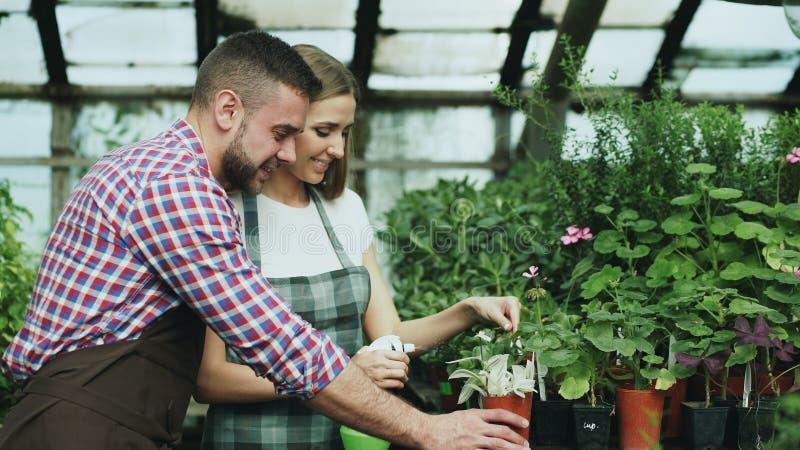 在运作自温室的围裙的愉快的年轻卖花人家庭 有吸引力的人容忍他的妻子,当她浇灌开花时 免版税库存图片