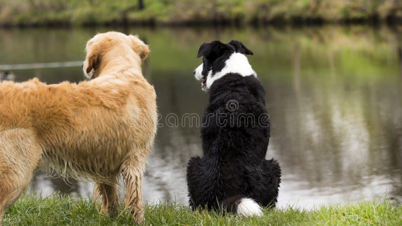 在运河旁边的两条狗 免版税库存图片
