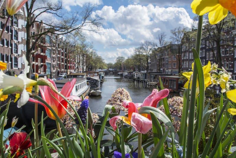 在运河的红色,白色和黄色花在阿姆斯特丹用小船、大厦和水作为背景 库存图片