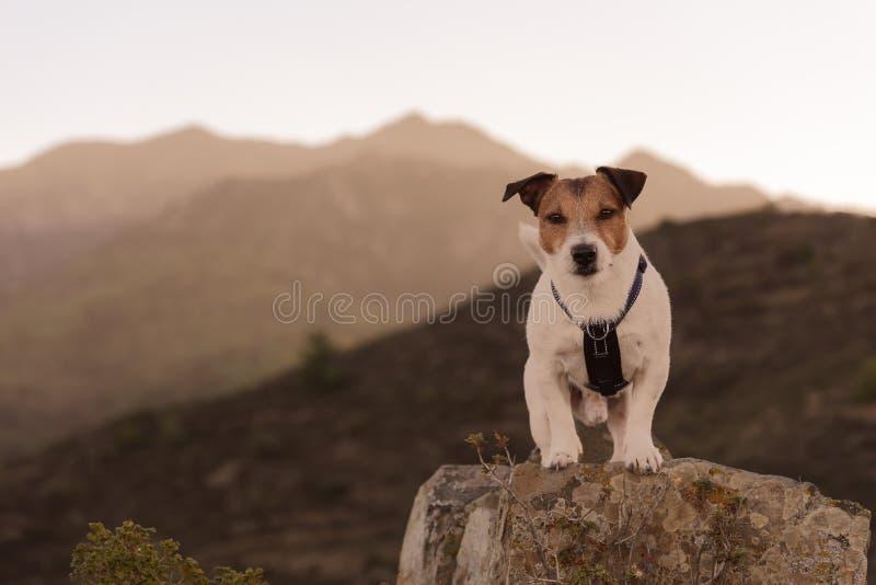 在远足在山的大石头顶部的狗身分 免版税库存照片