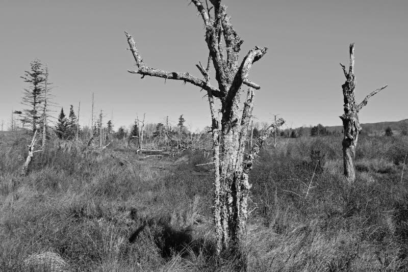 在迦南原野的死的树 库存照片
