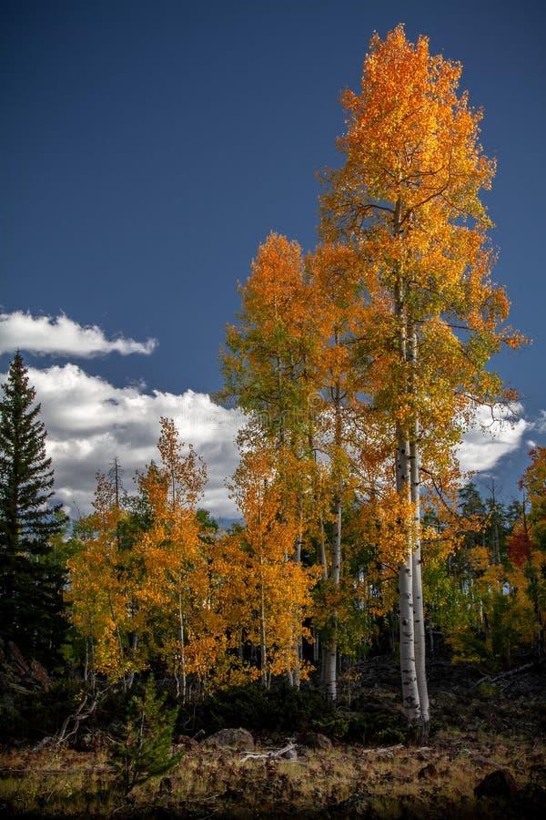 在迪克西国家森林的熔岩荒野的壮观的秋叶在锡达布雷克斯国家保护区外面 库存图片
