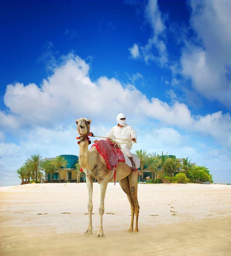 在迪拜海岛海滩的骆驼 免版税库存图片