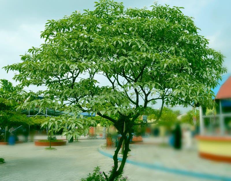 在迷离图片后的绿色树 免版税库存照片