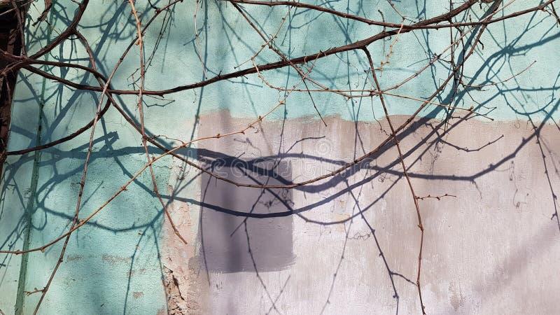 在退色的灰泥墙壁背景的光秃的树枝 库存照片
