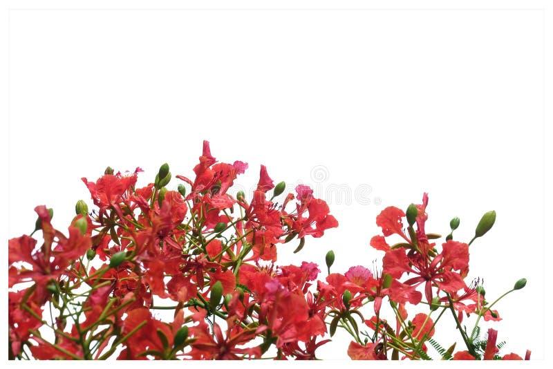 在选择聚焦橙色孔雀花美丽的花束  免版税库存图片