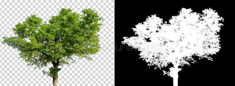 在透明图片背景的唯一树与裁减路线,与裁减路线的唯一树和在黑色的阿尔法通道 皇族释放例证