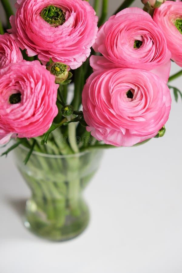 在透明玻璃花瓶的桃红色毛茛属花束在白色桌上 特写镜头 对五颜六色的贺卡,花交付 免版税库存图片