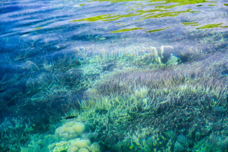 在透明的绿松石水下的Defocus珊瑚礁 图库摄影