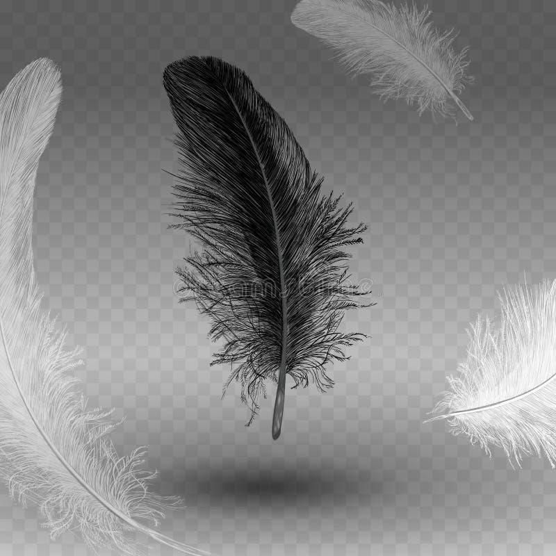 在透明背景隔绝的旋转的现实羽毛 容易的样式,可以用于飞行物,横幅,网 d的元素 库存例证