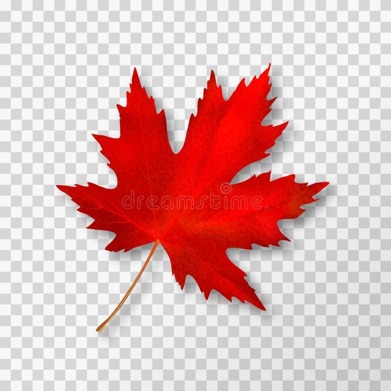 在透明背景隔绝的枫叶 明亮的红色秋天现实叶子 10 eps例证盾向量 免版税库存照片
