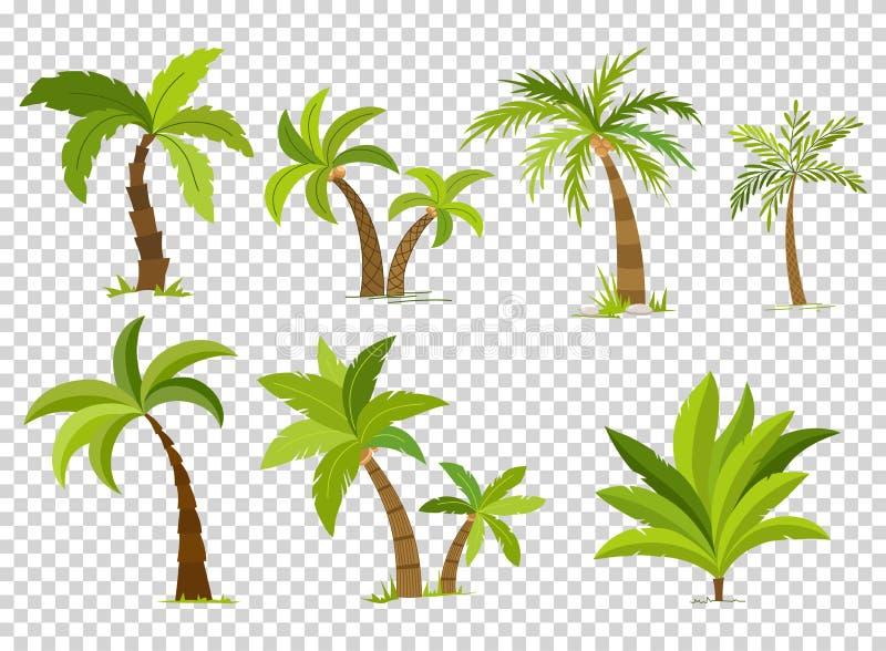 在透明背景隔绝的棕榈树 美丽的vectro palma树集合传染媒介例证 皇族释放例证