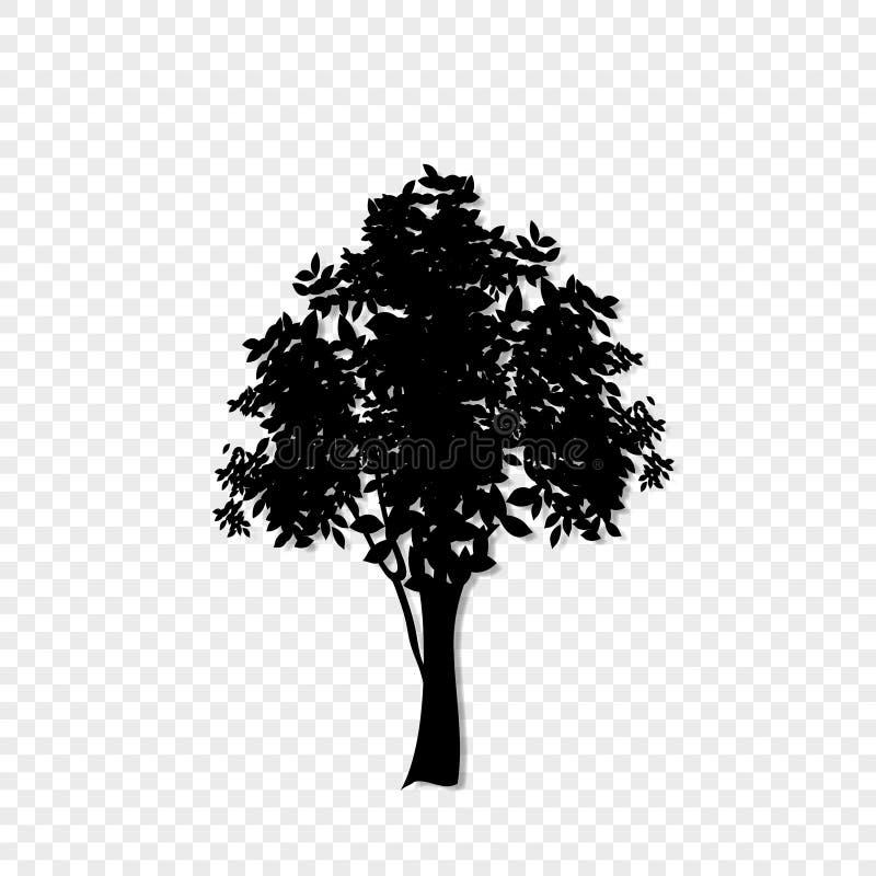 在透明背景隔绝的生叶的树象黑剪影  皇族释放例证