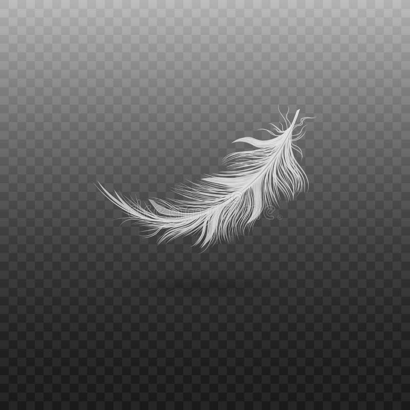 在透明背景隔绝的白色鸟羽毛,漂浮在空气的现实蓬松天鹅全身羽毛 向量例证