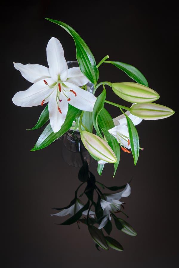 在透明花瓶的白百合,反射在黑玻璃背景-垂直 百合属植物Navona是亚洲百合杂种品种 免版税库存照片