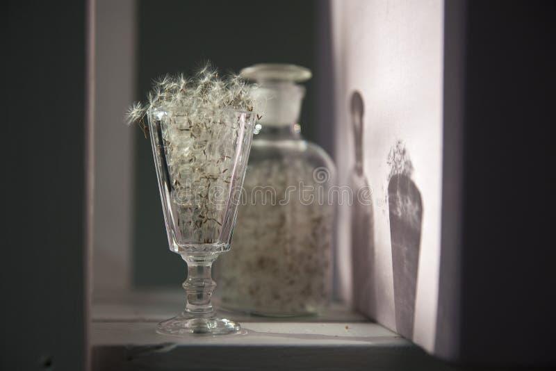 在透明花瓶的蒲公英反对太阳 免版税库存照片