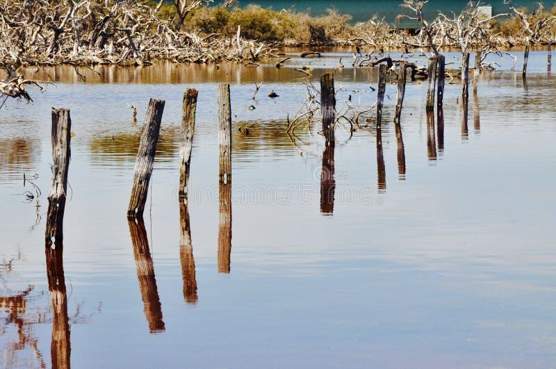 在透视的打桩:湖Coogee,西澳州 图库摄影