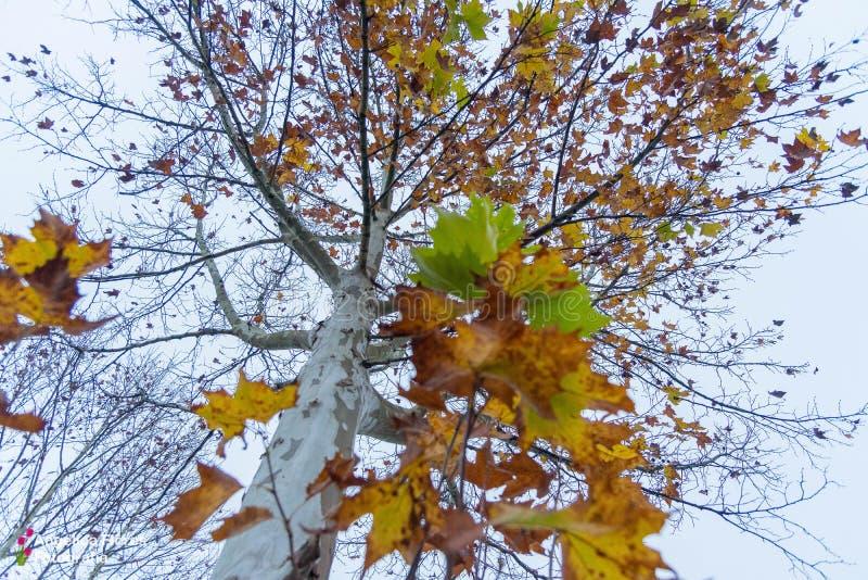 在透视的自然树的树干 免版税库存照片