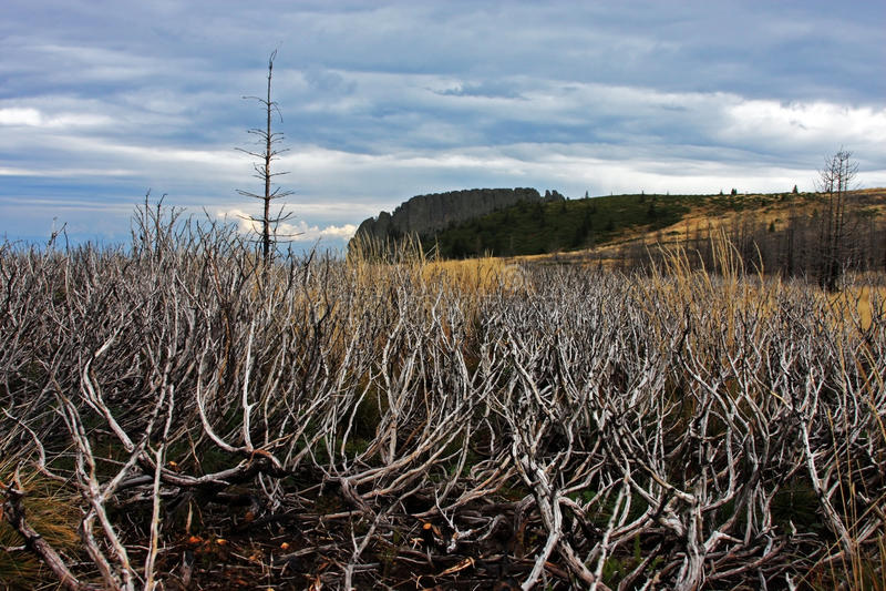 在途中的被烧的植被山 免版税库存照片