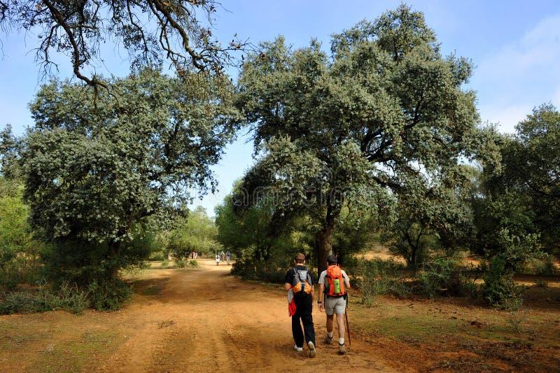 在途中的香客向圣地亚哥, Camino de圣地亚哥,通过de拉普拉塔,西班牙 图库摄影