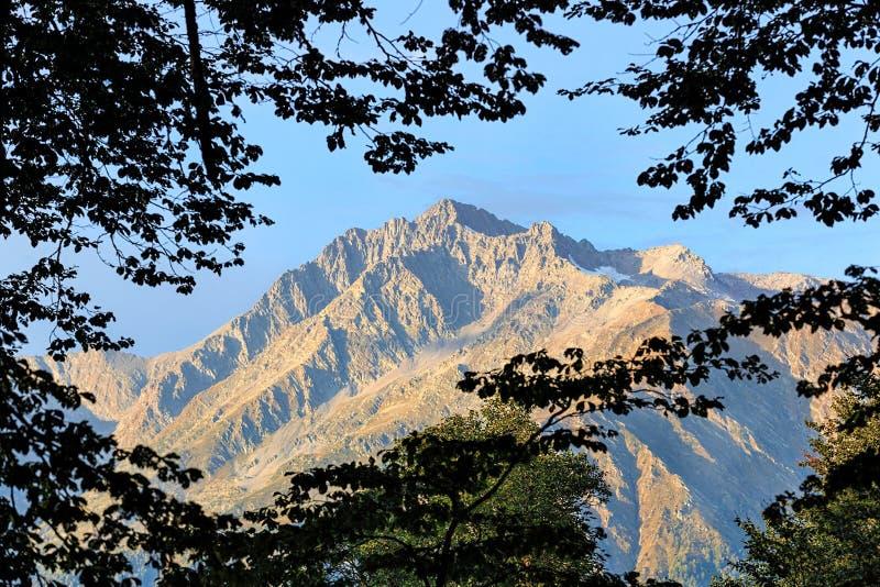 在通过在蓝天背景的绿色树被观看的主要高加索土坎的山峰Chugush 美丽的风景夏天la 库存图片