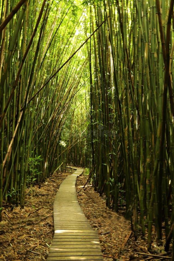 在道路上穿过竹森林在Haleakal国家公园 免版税库存照片