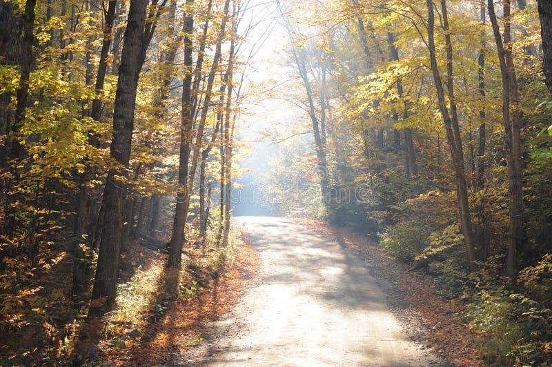 在道路的清早光在秋天 免版税库存图片