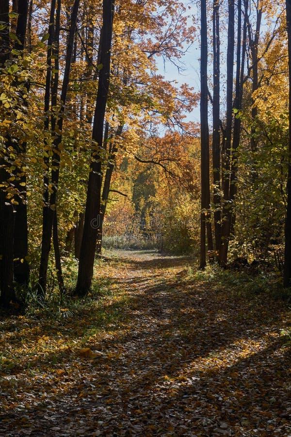在道路的秋叶 免版税库存照片