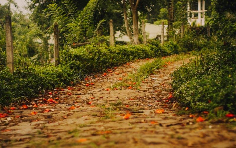 在道路的红色花向天堂 库存照片