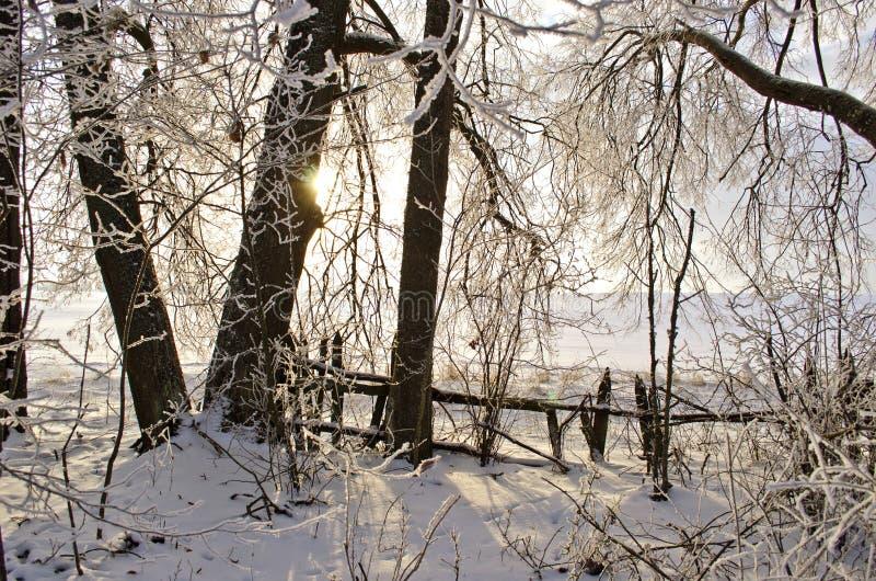 在遗弃老冬景花园的日出 免版税库存照片