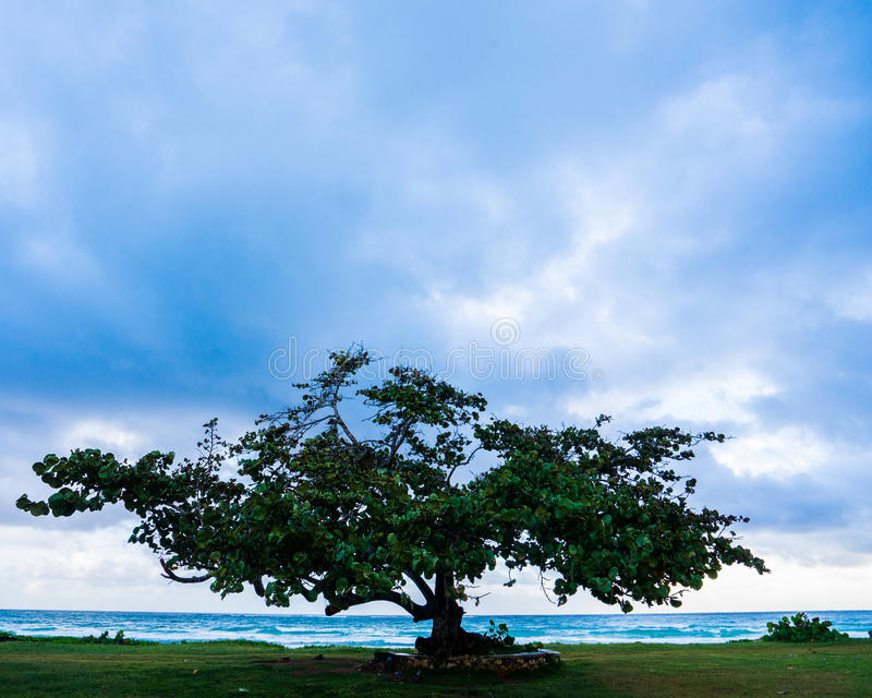 在遥远的牙买加岸附近的孤立树在日出 免版税库存照片