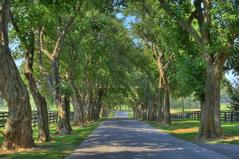 在遮荫结构树的运输路线 库存图片