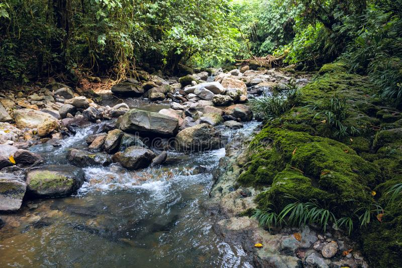 在那坡省的亚马逊热带雨林 库存照片
