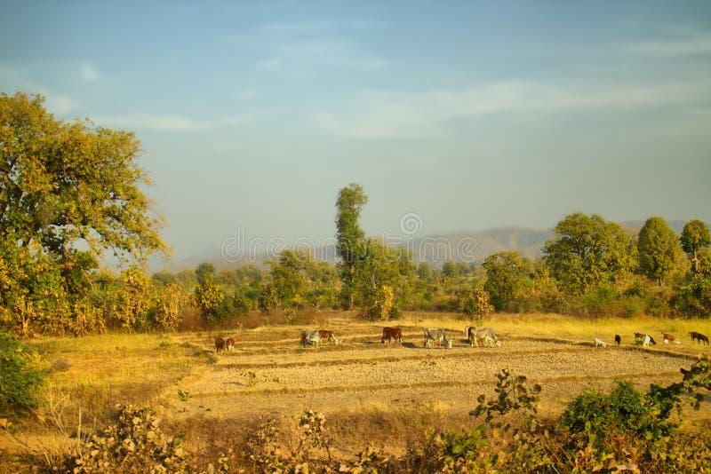 在那格普尔,印度附近的区域 与果树园农夫庭院的干燥山麓小丘 库存照片