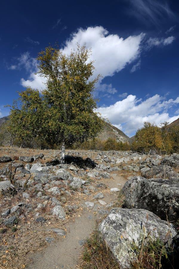 在那里,其中天空捉住了桦树的举行 免版税库存照片