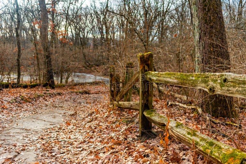 在郊区威洛斯普林斯的冬天期间青苔被盖的篱芭在一串足迹的森林里 库存图片
