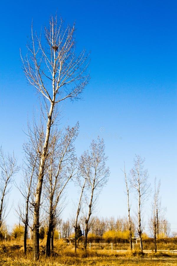 在郊外的几棵树 免版税库存照片