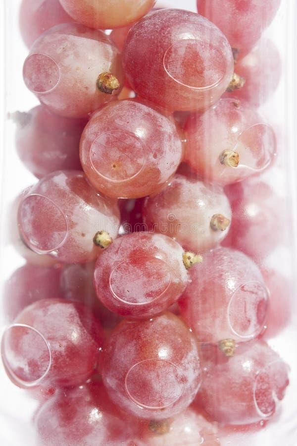 在酒杯的葡萄 免版税库存图片