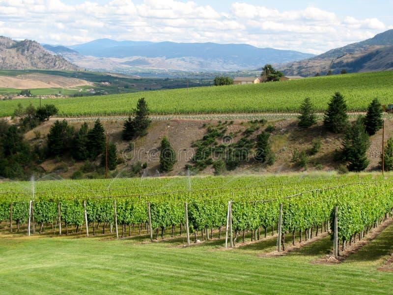 在酒领域的灌溉系统 免版税库存图片