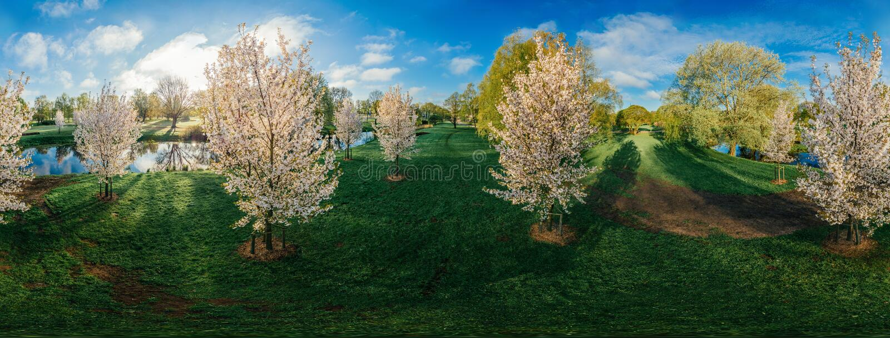 在里加市360 VR寄生虫图片的白色树虚拟现实的,全景 图库摄影