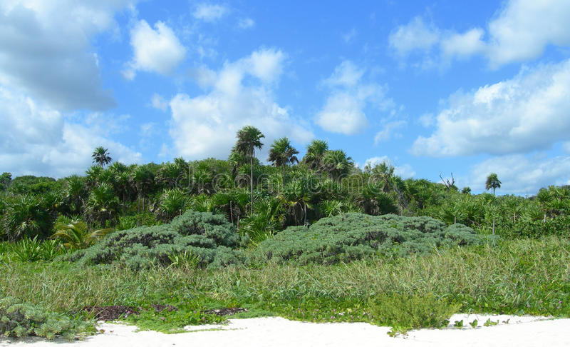 在里维埃拉玛雅人的加勒比海滩,坎昆,墨西哥 免版税库存图片