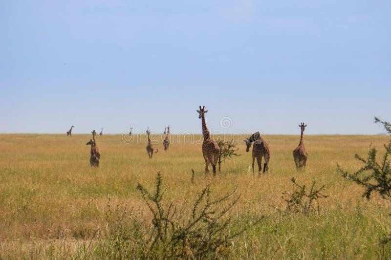 在野生生物保护区 库存图片