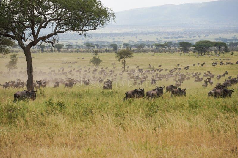 在野生生物保护区 免版税库存图片