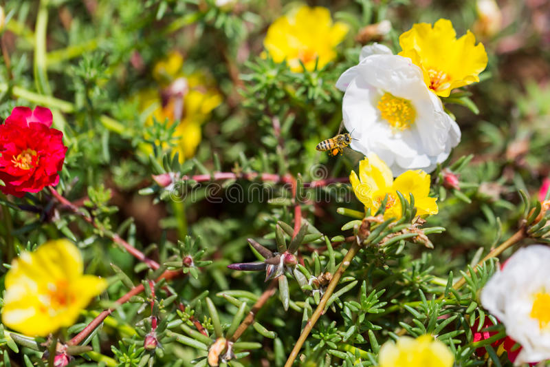 在野花的蜂 免版税库存照片