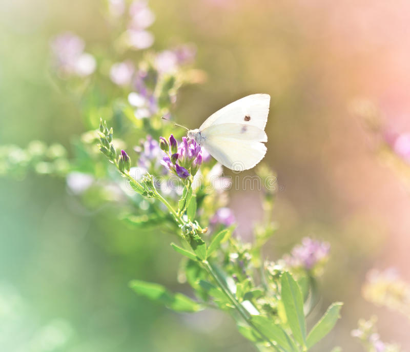 在野花的蝴蝶 图库摄影