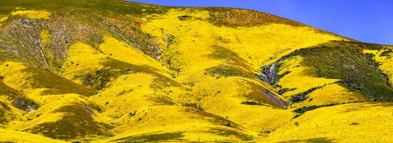 在野花盖的山全景,卡里索平原国家历史文物,加利福尼亚中部 库存图片